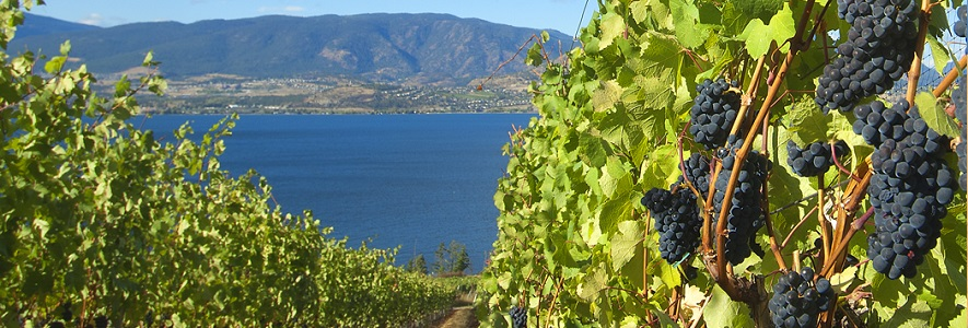 Lakeshore Wine Route